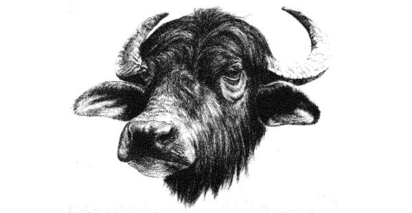 Una vera bufala